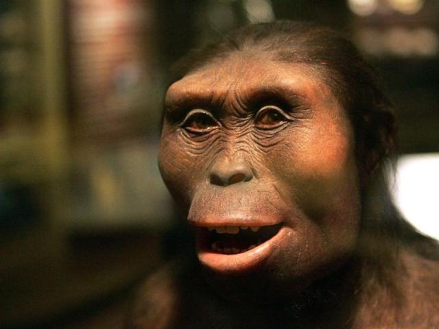 lucy-afarensis-new-fossil-skeleton_22047_990x742.ngsversion.1424660379842.adapt.768.1