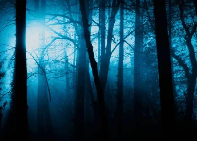 bosque-siniestro